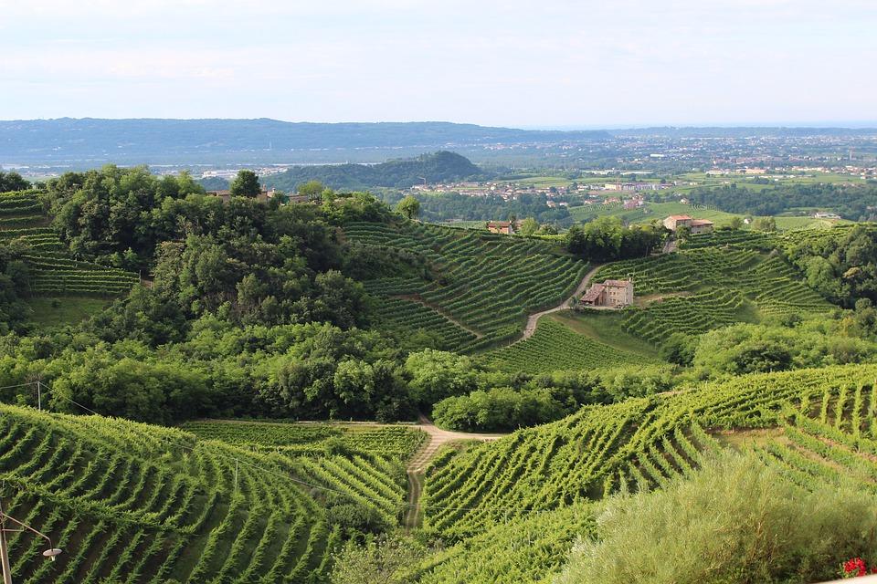 Un 15% de incremento en la vendimia italiana lo situará como el mayor productor del mundo