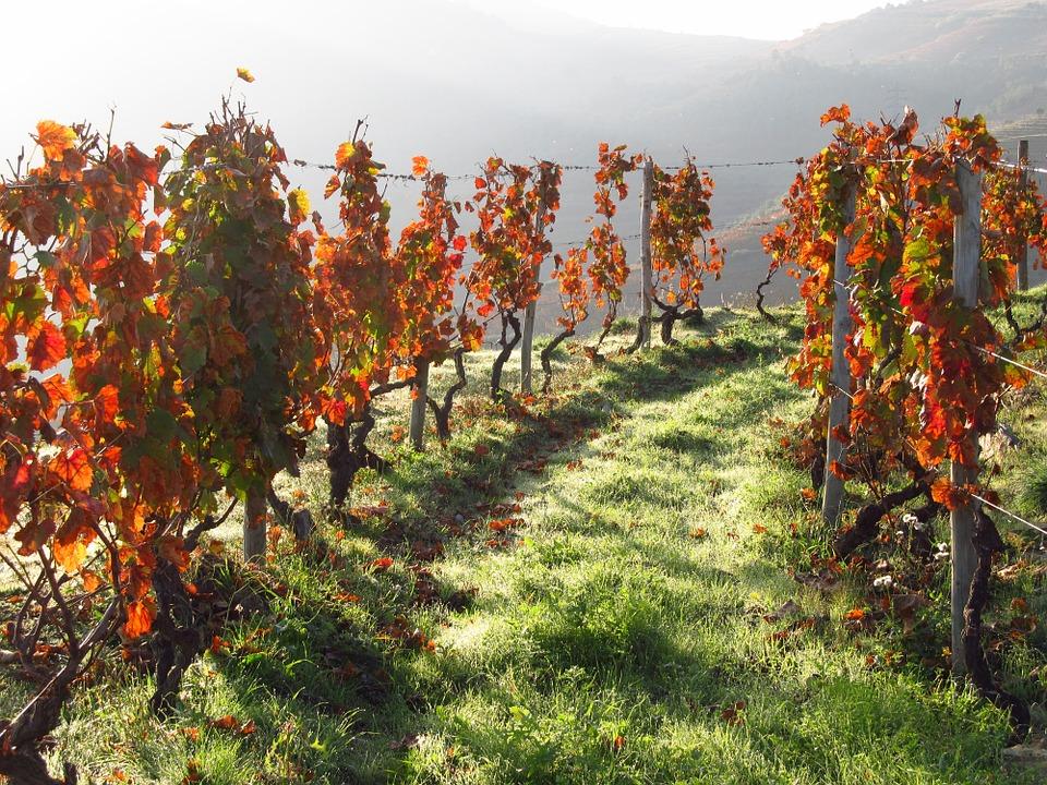 Aumentan las ventas de vinos portugueses en UK