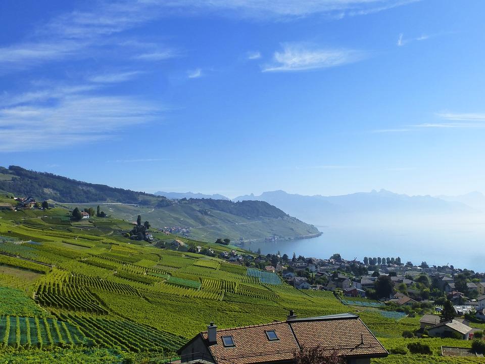 Se quiere solicitar a la UNESCO que el viñedo europeo sea considerado Bien Inmaterial de la Humanidad