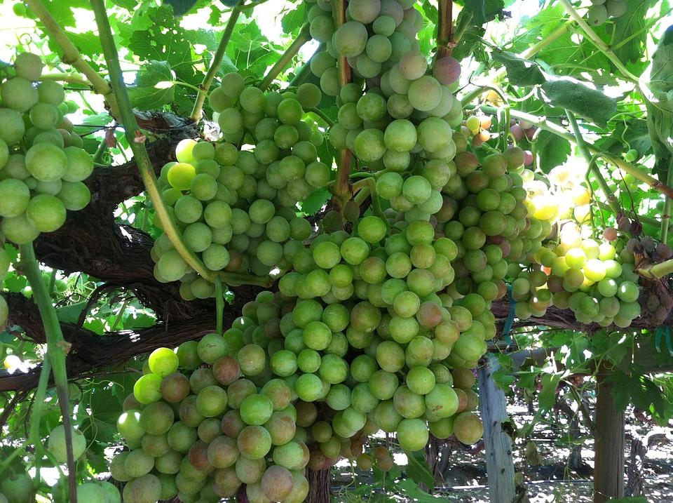 Países con más superficie de viñedos orgánicos