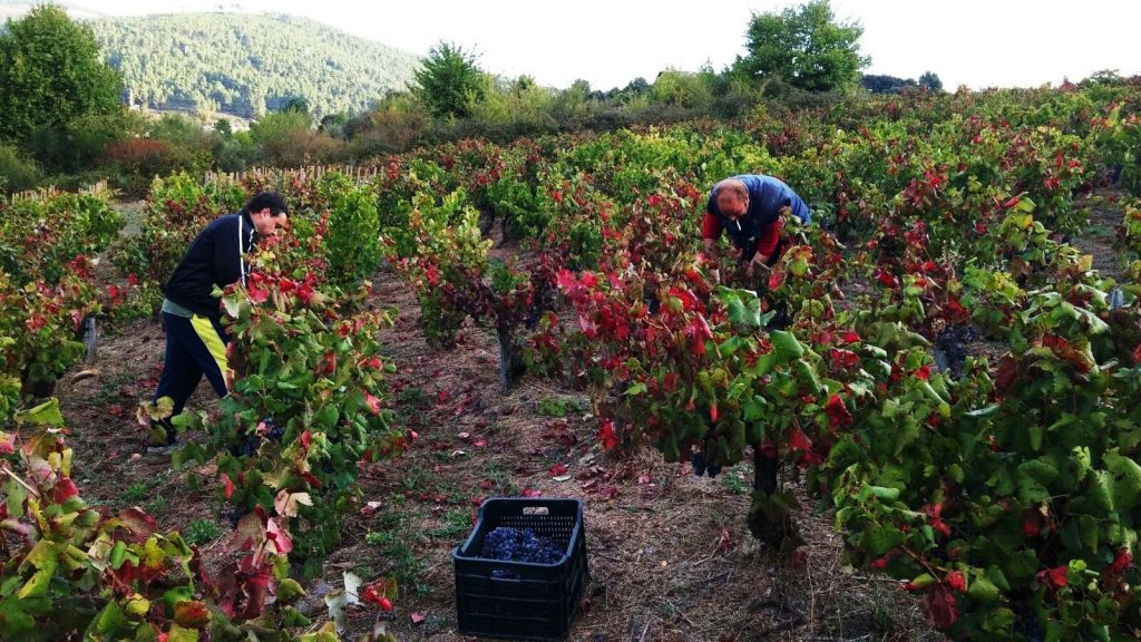 Sobrelias visitará mañana Valdeorras para catar sus vinos