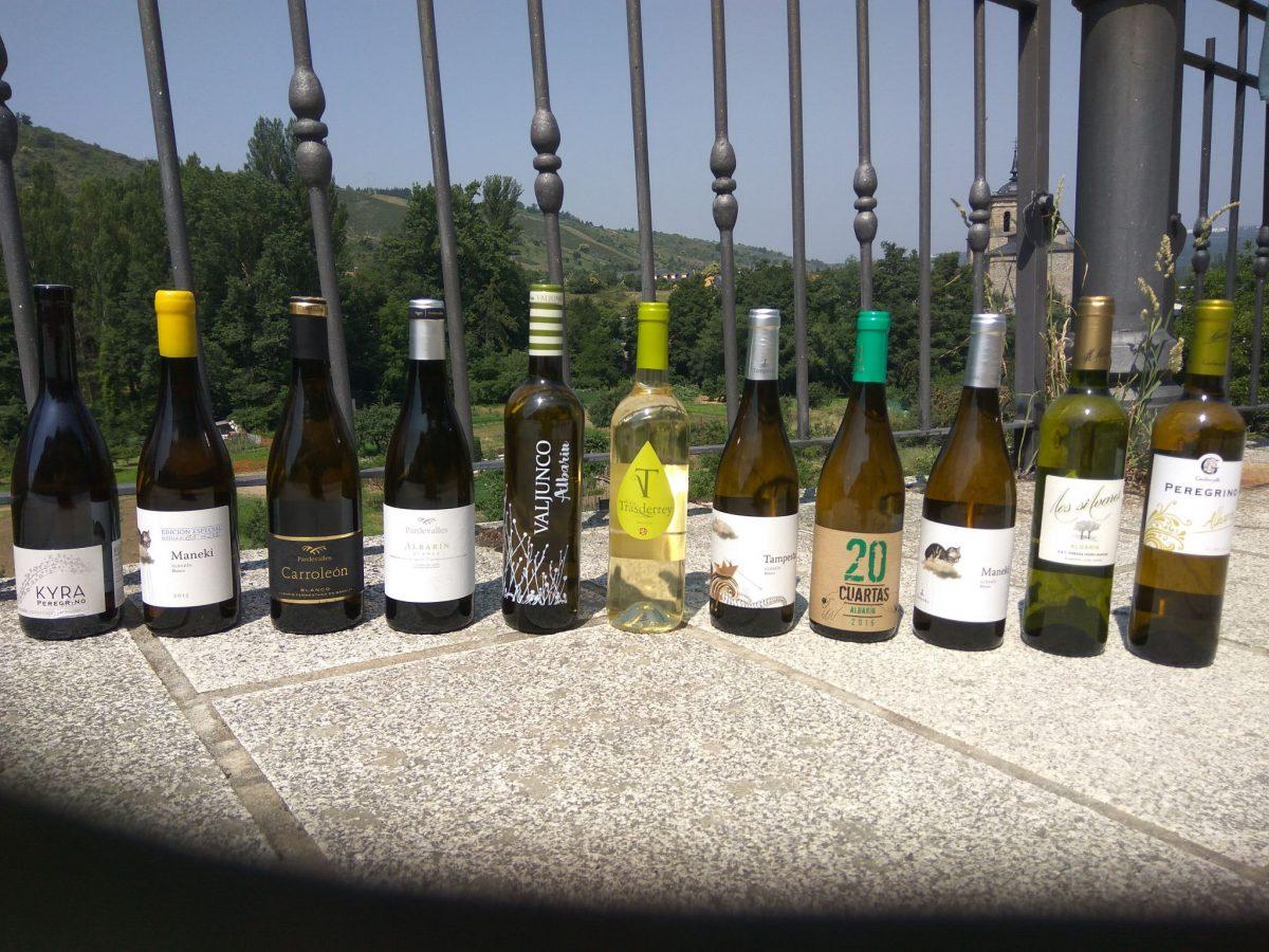 Cata de vinos blancos DO Tierra de León