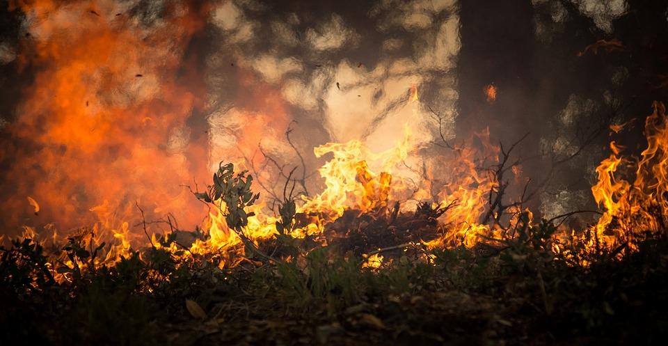 Los viñedos californianos escapan de los incendios forestales, aunque el humo es una preocupación