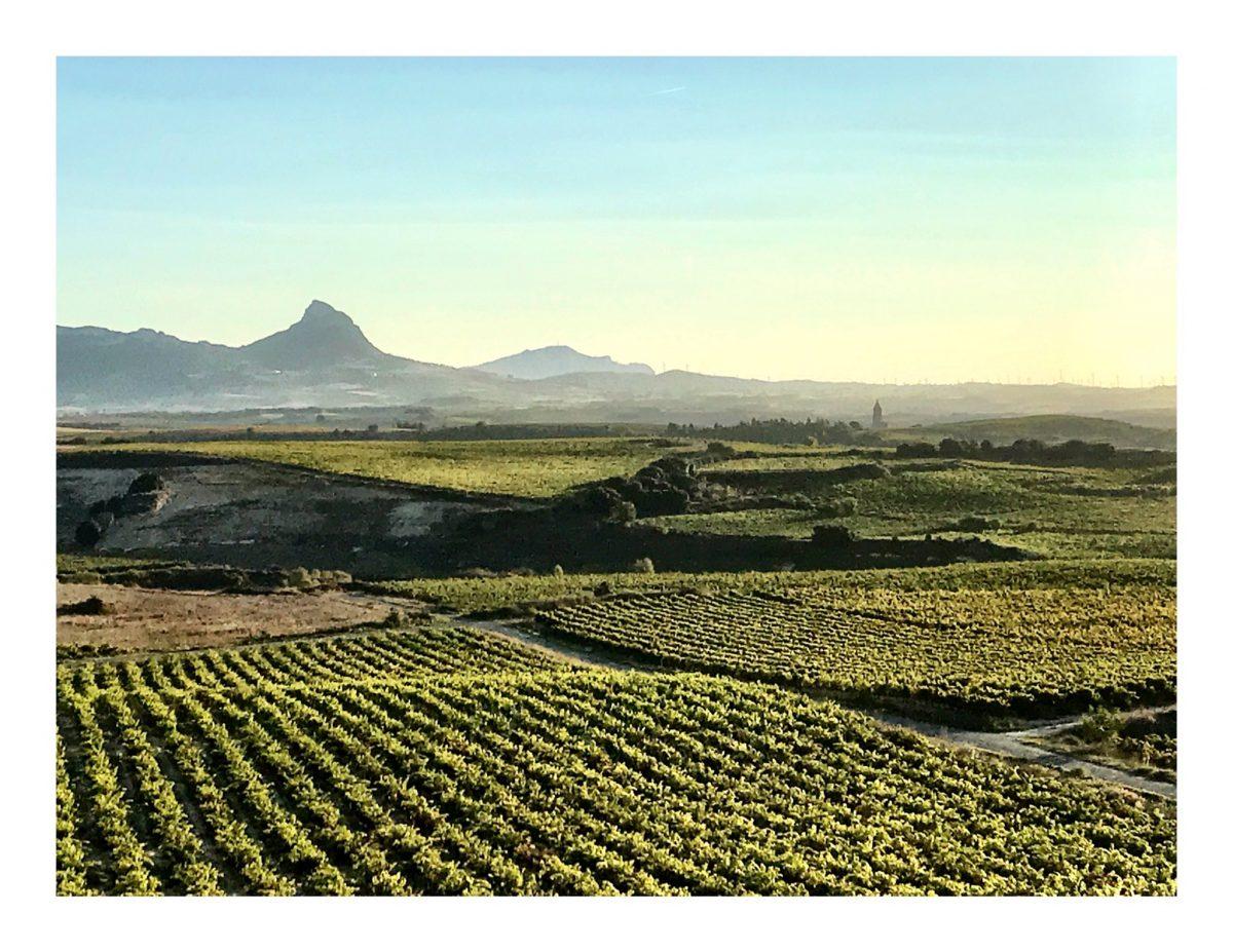 Tim Atkin cata casi 1.000 vinos de Rioja en su última visita
