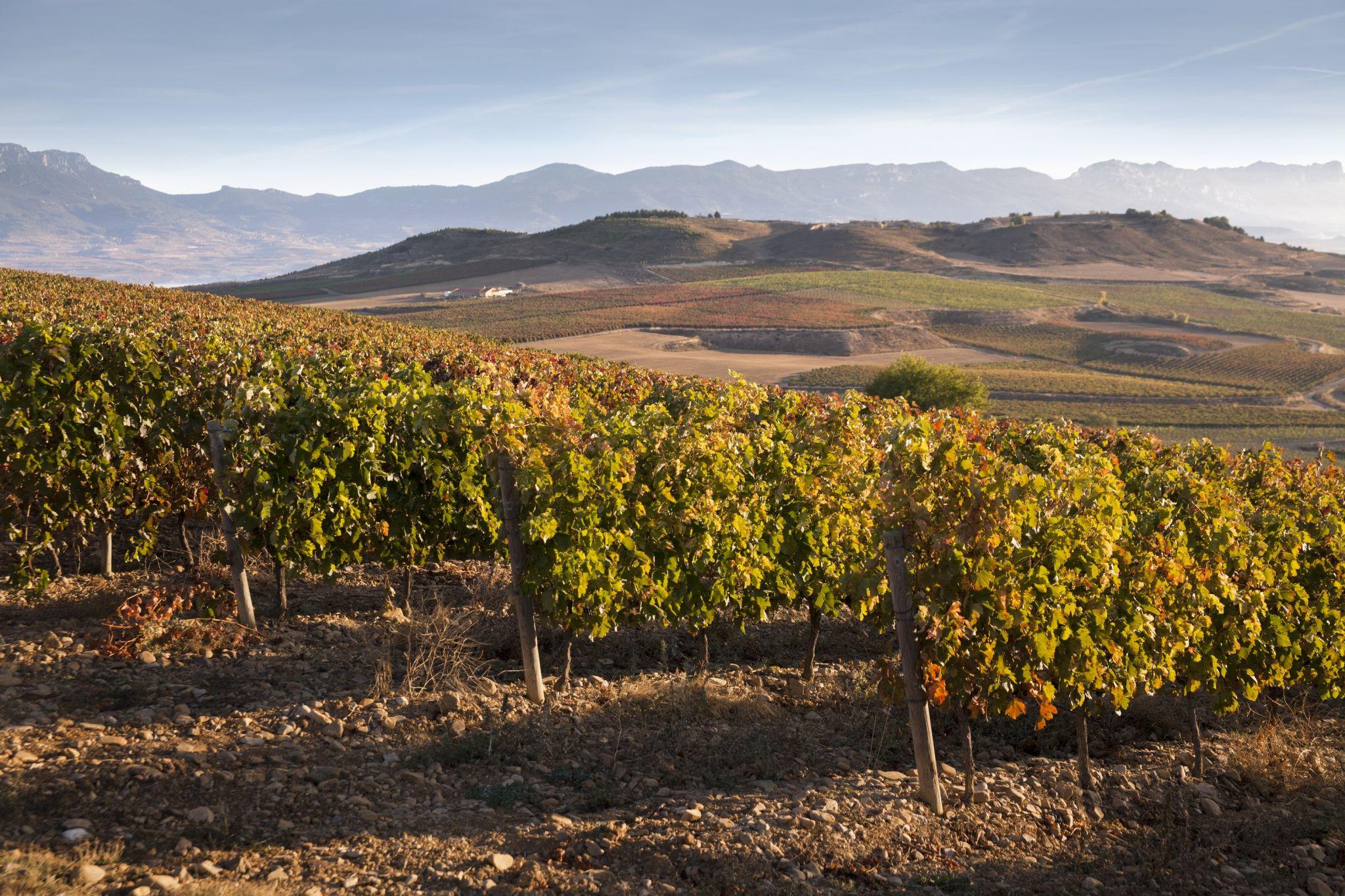 Beronia Rioja reconocida por su compromiso con el medio ambiente