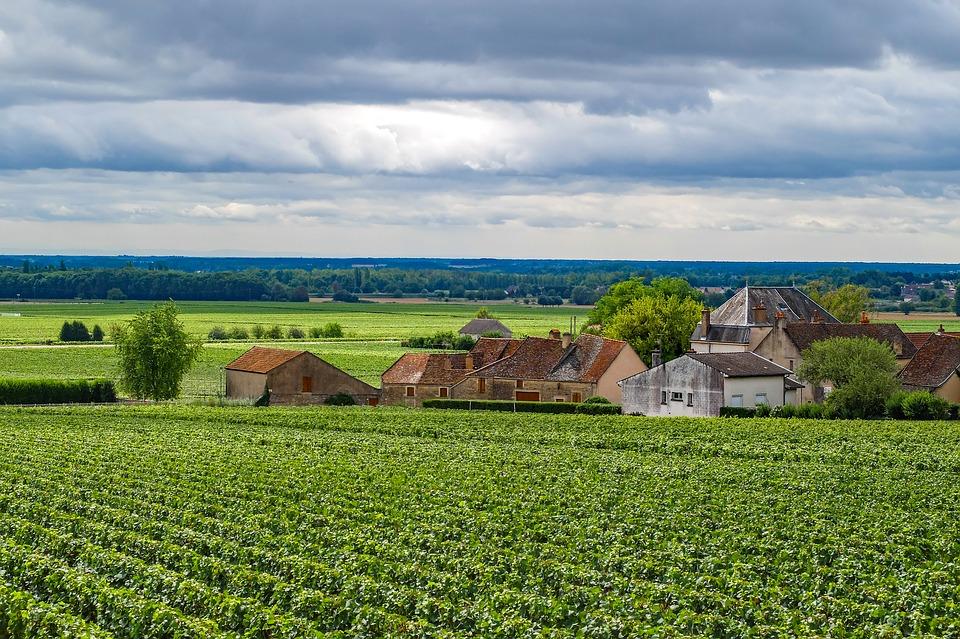 cosecha de Borgoña