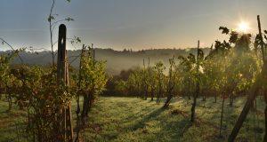cifras de cierre de la cosecha en Italia