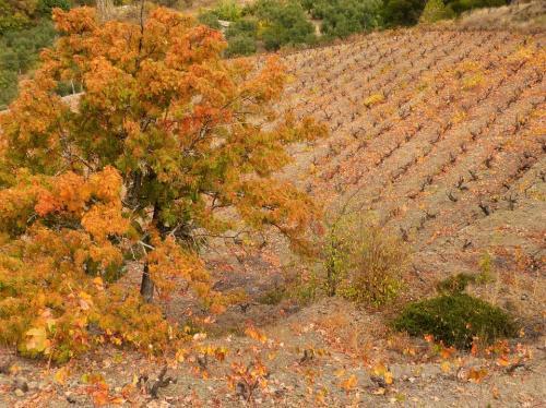 autumn-1022068 960 720