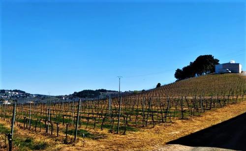 inclinacion viñedo