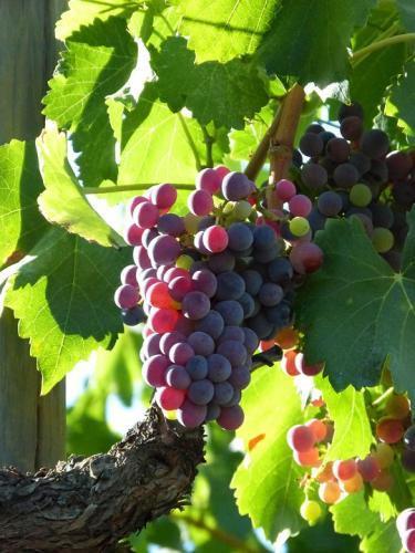 vine-1595031 960 720