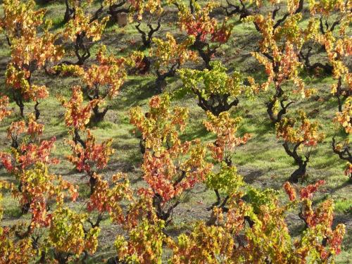vineyard-1821889 960 720