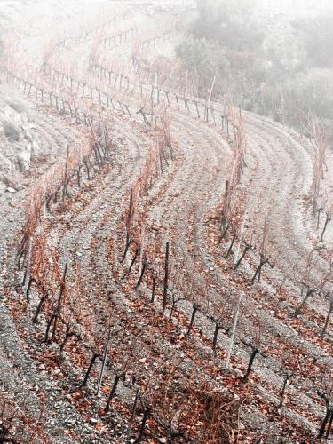 vineyard-1914220 960 720