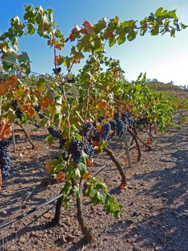 vineyard-988134 960 720